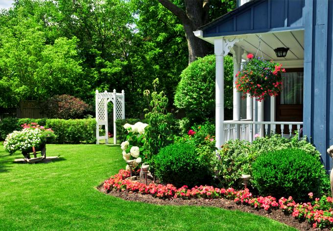 Quel arbuste choisir pour votre jardin?